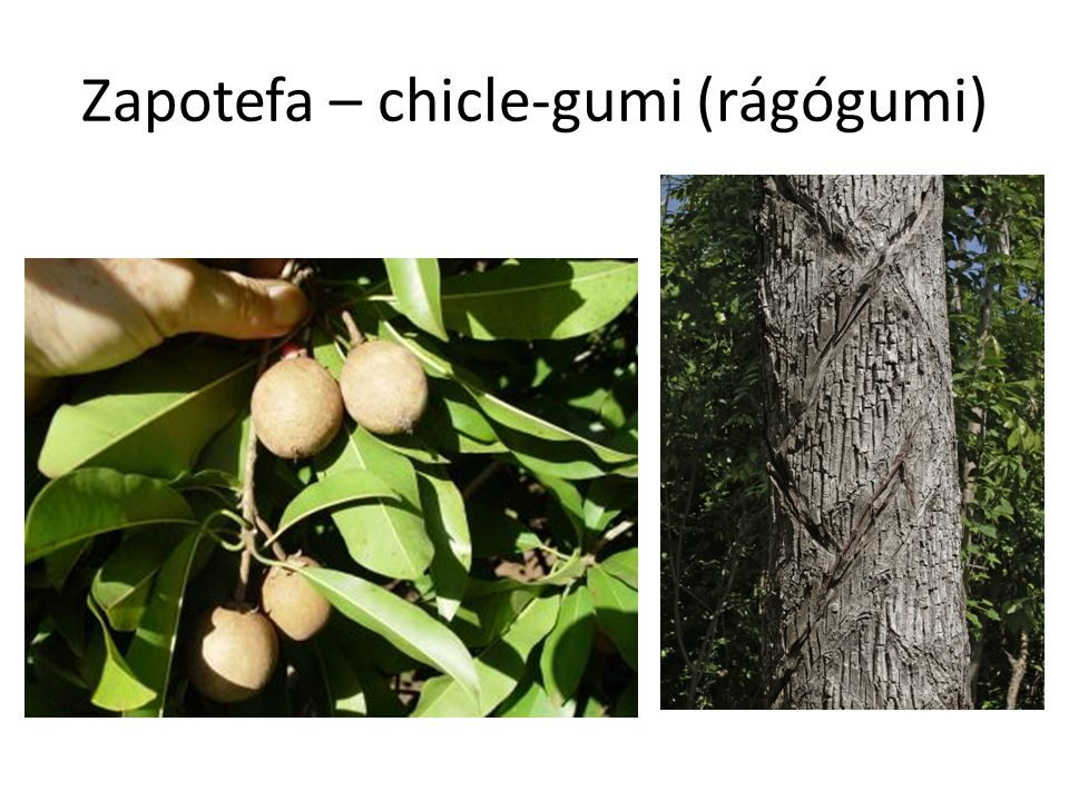 Zapotefa – chicle-gumi (rágógumi)