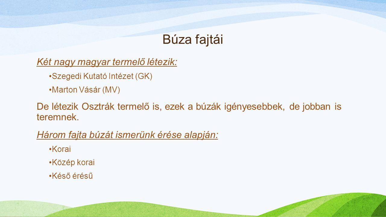 Búza fajtái Két nagy magyar termelő létezik: