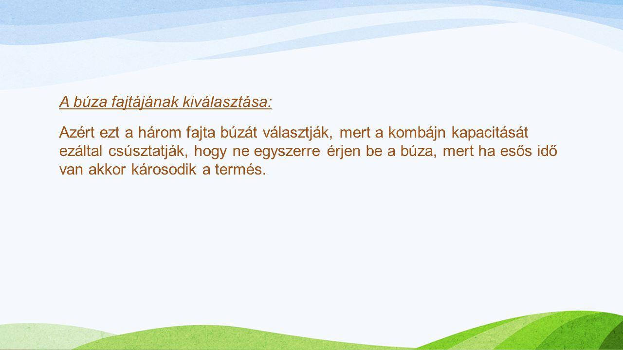 A búza fajtájának kiválasztása: Azért ezt a három fajta búzát választják, mert a kombájn kapacitását ezáltal csúsztatják, hogy ne egyszerre érjen be a búza, mert ha esős idő van akkor károsodik a termés.