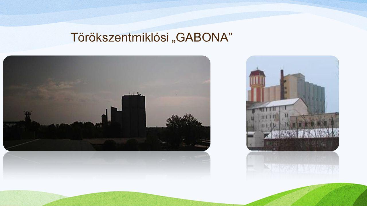 """Törökszentmiklósi """"GABONA"""