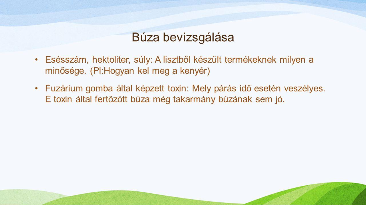 Búza bevizsgálása Esésszám, hektoliter, súly: A lisztből készült termékeknek milyen a minősége. (Pl:Hogyan kel meg a kenyér)