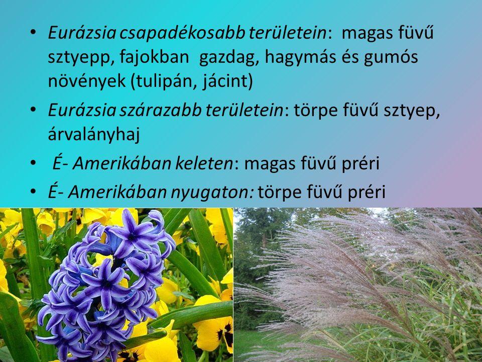 Eurázsia csapadékosabb területein: magas füvű sztyepp, fajokban gazdag, hagymás és gumós növények (tulipán, jácint)