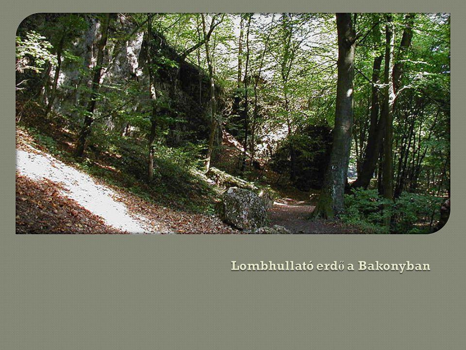 Lombhullató erdő a Bakonyban