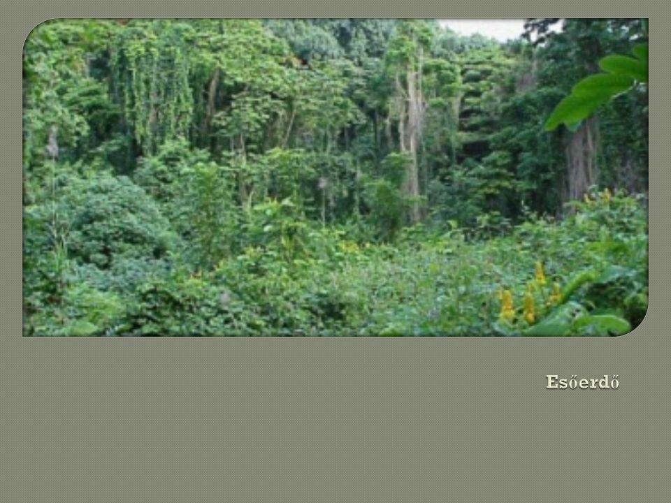 Esőerdő