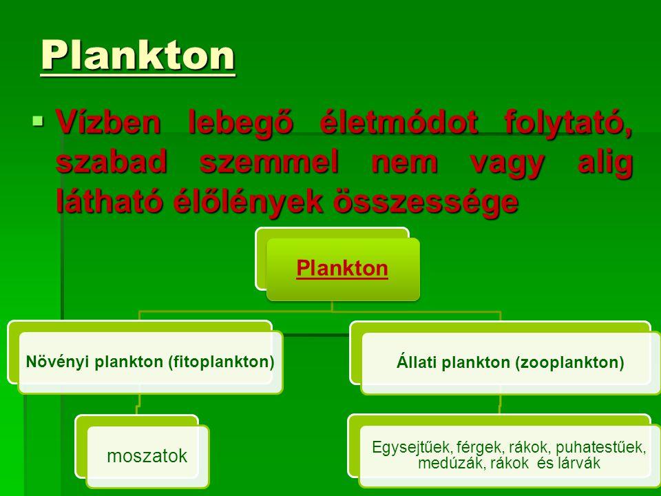 Növényi plankton (fitoplankton) Állati plankton (zooplankton)