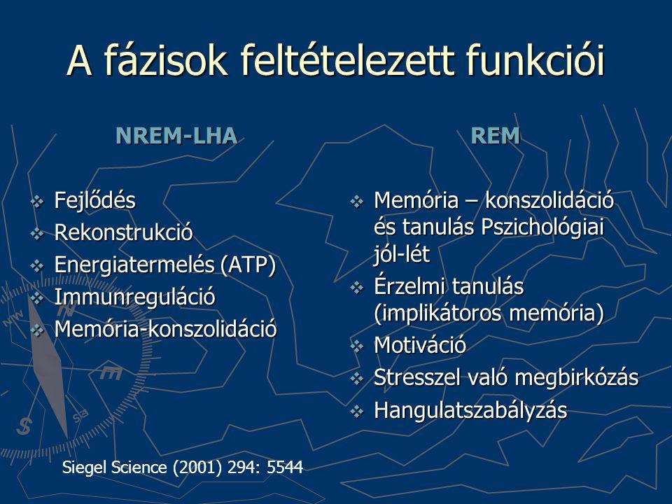 A fázisok feltételezett funkciói