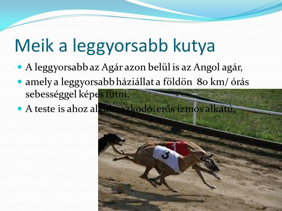 Meik a leggyorsabb kutya