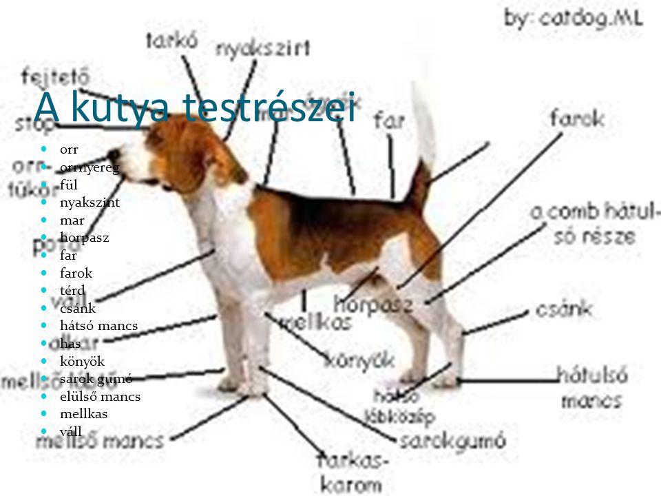 A kutya testrészei orr orrnyereg fül nyakszint mar horpasz far farok