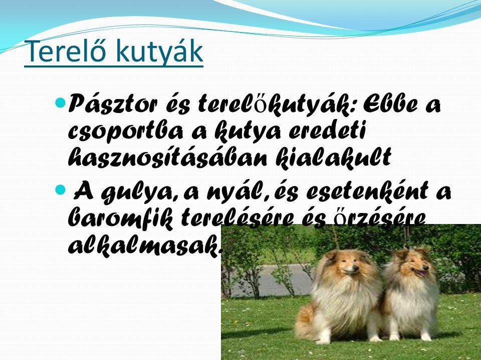 Terelő kutyák Pásztor és terelőkutyák: Ebbe a csoportba a kutya eredeti hasznosításában kialakult.
