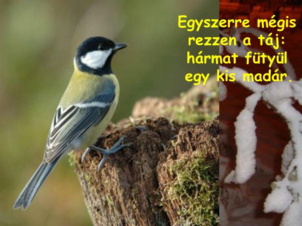 Egyszerre mégis rezzen a táj: hármat fütyül egy kis madár.