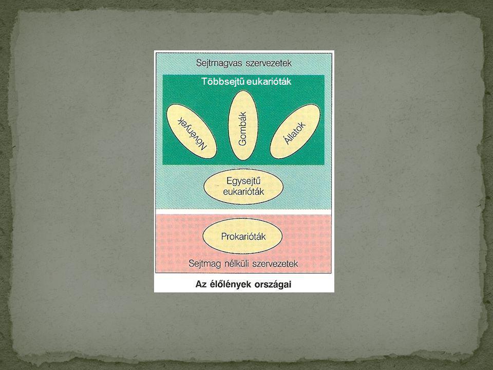 Többsejtű eukarióták