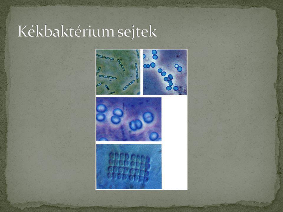 Kékbaktérium sejtek Lovas: Édesvízi parányok 1. (növények) Búvár zsebkönyvek, Móra Kiadó