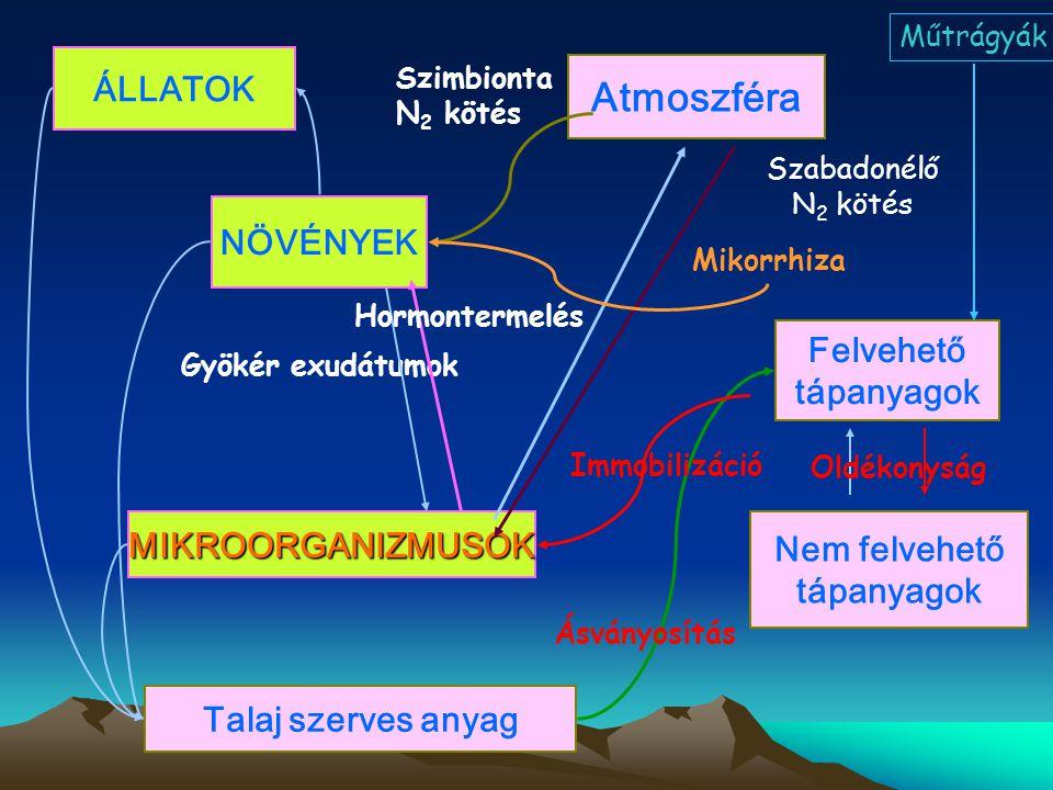 Atmoszféra ÁLLATOK NÖVÉNYEK Felvehető tápanyagok MIKROORGANIZMUSOK