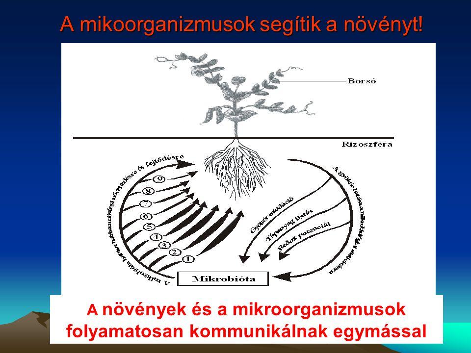 A mikoorganizmusok segítik a növényt!