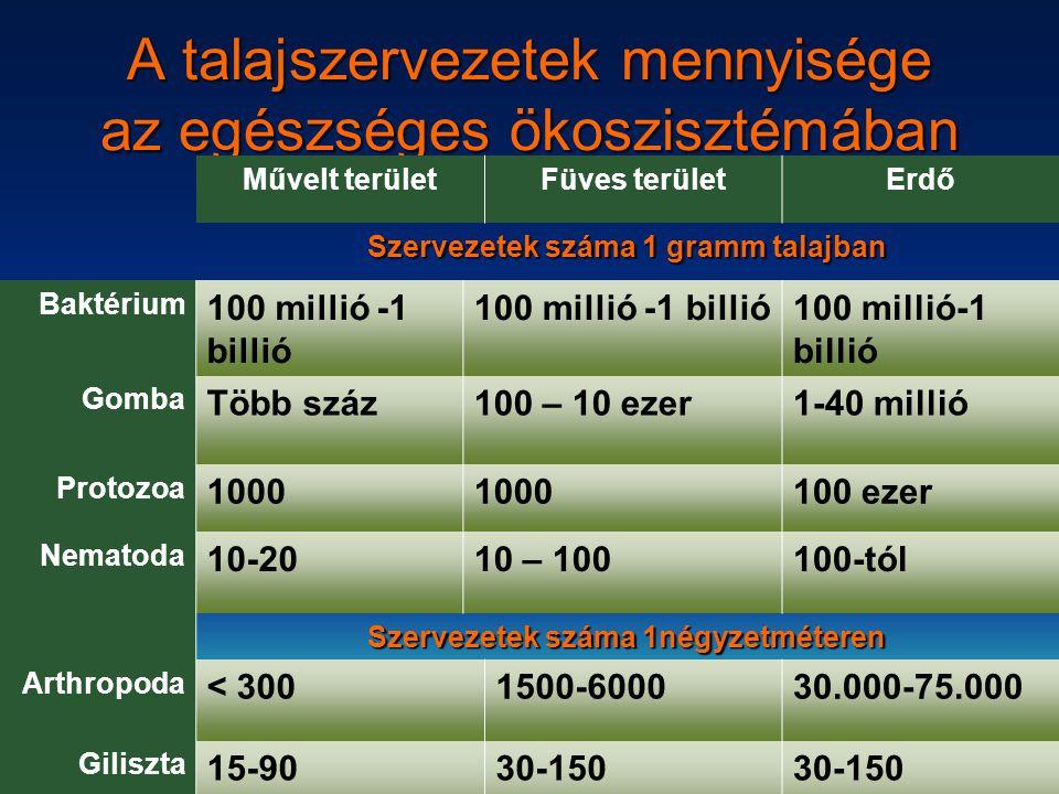 A talajszervezetek mennyisége az egészséges ökoszisztémában
