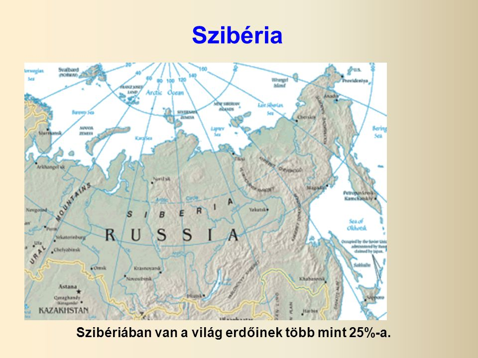 Szibériában van a világ erdőinek több mint 25%-a.