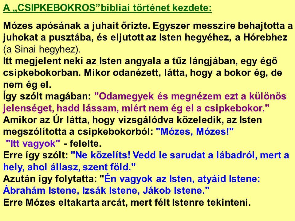 """A """"CSIPKEBOKROS bibliai történet kezdete:"""