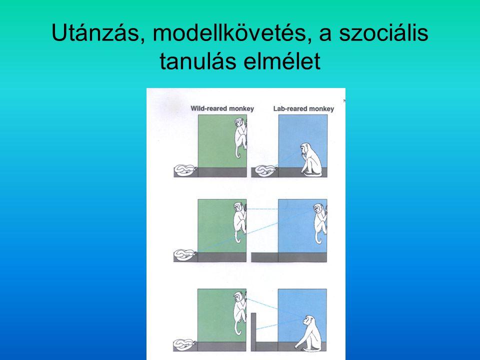 Utánzás, modellkövetés, a szociális tanulás elmélet