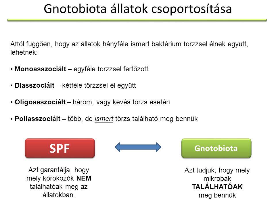 Gnotobiota állatok csoportosítása