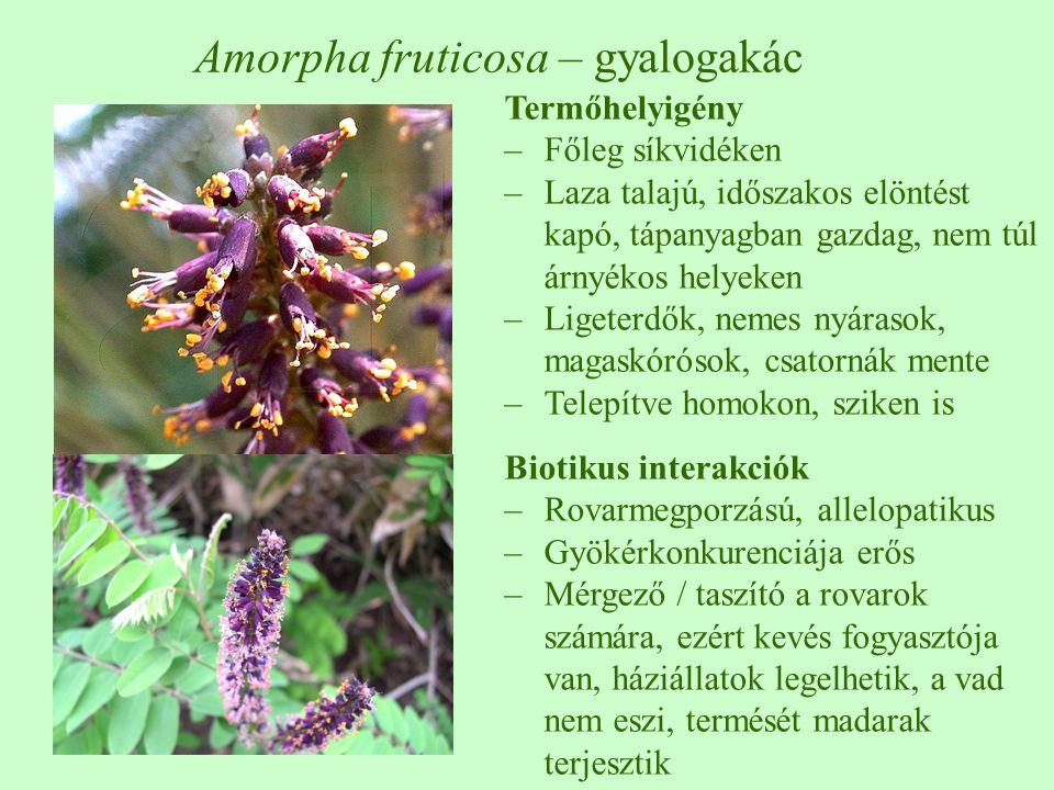 Amorpha fruticosa – gyalogakác