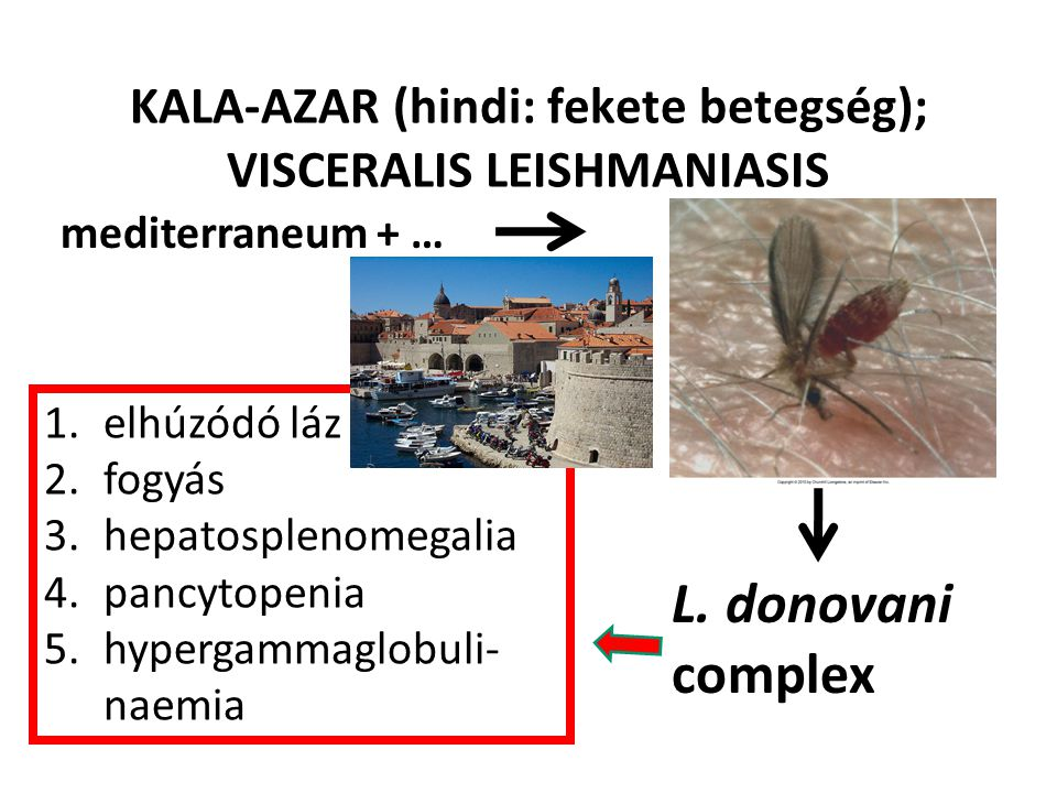 KALA-AZAR (hindi: fekete betegség); VISCERALIS LEISHMANIASIS