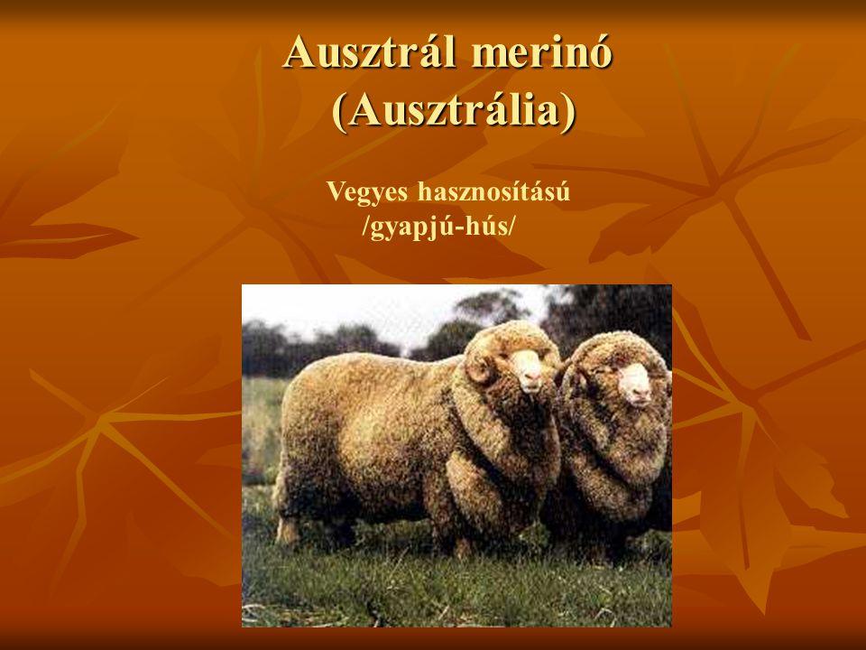 Ausztrál merinó (Ausztrália)