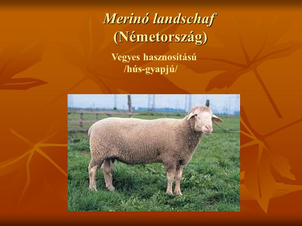 Merinó landschaf (Németország)