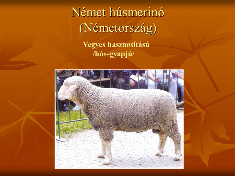 Német húsmerinó (Németország)