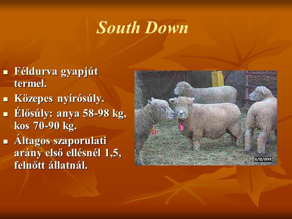 South Down Féldurva gyapjút termel. Közepes nyírósúly.