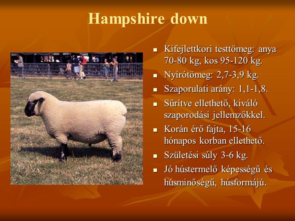 Hampshire down Kifejlettkori testtömeg: anya 70-80 kg, kos 95-120 kg.