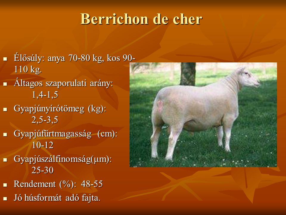 Berrichon de cher Élősúly: anya 70-80 kg, kos 90-110 kg.