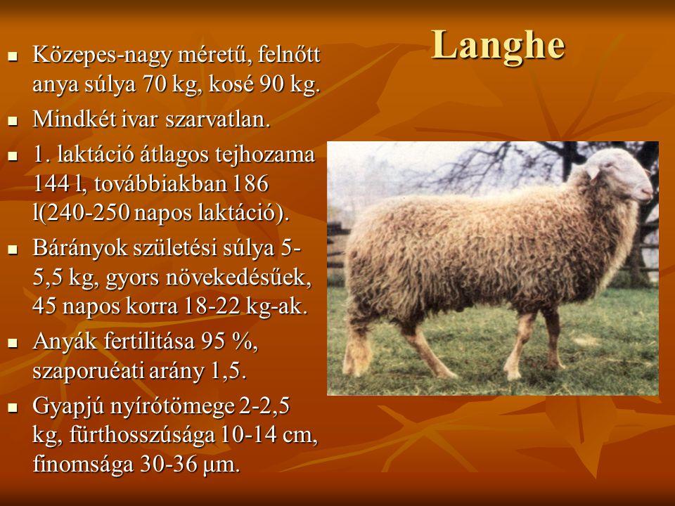 Langhe Közepes-nagy méretű, felnőtt anya súlya 70 kg, kosé 90 kg.