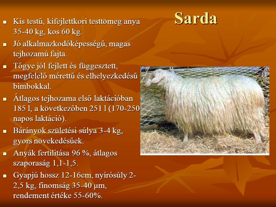 Sarda Kis testű, kifejlettkori testtömeg anya 35-40 kg, kos 60 kg.