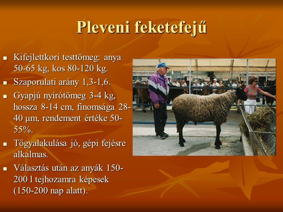 Pleveni feketefejű Kifejlettkori testtömeg: anya 50-65 kg, kos 80-120 kg. Szaporulati arány 1,3-1,6.