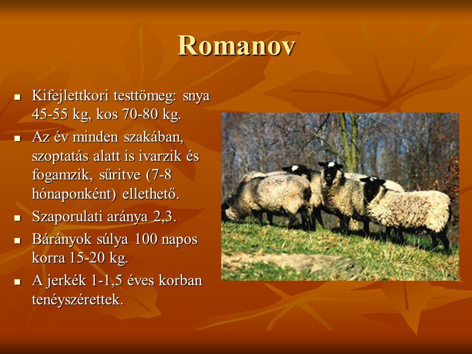 Romanov Kifejlettkori testtömeg: snya 45-55 kg, kos 70-80 kg.