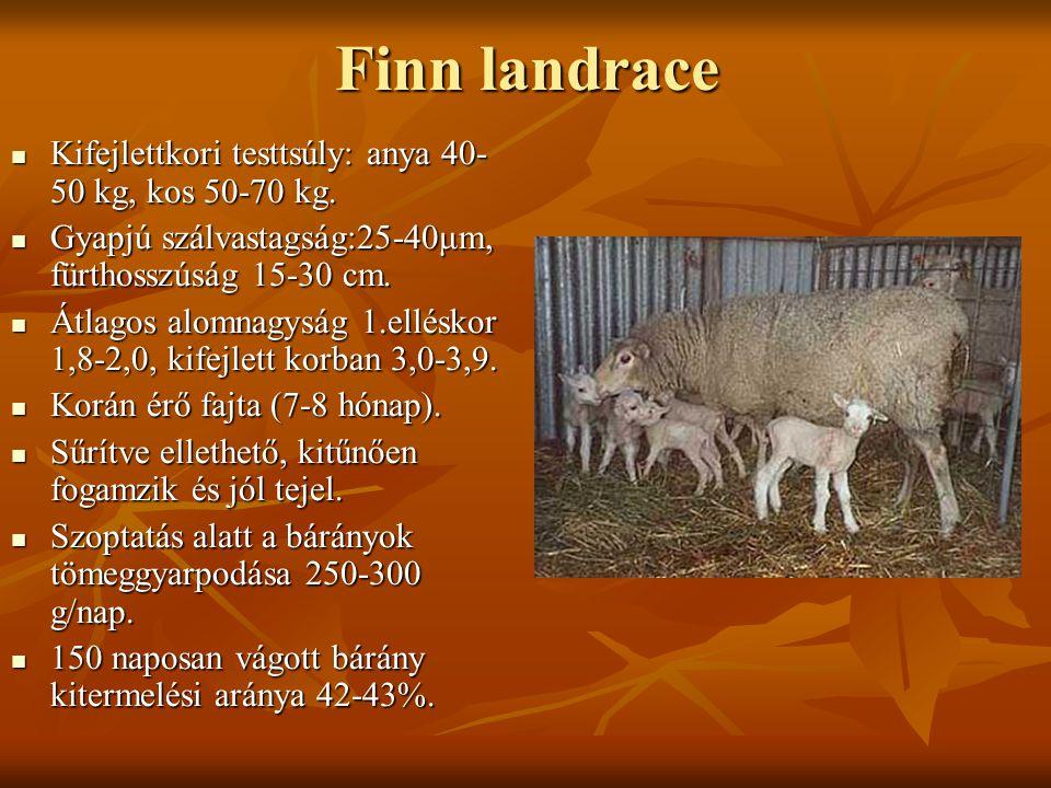 Finn landrace Kifejlettkori testtsúly: anya 40-50 kg, kos 50-70 kg.