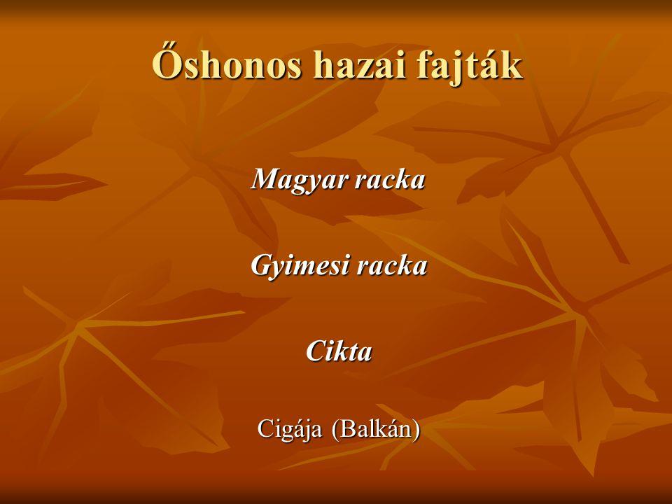 Őshonos hazai fajták Magyar racka Gyimesi racka Cikta Cigája (Balkán)
