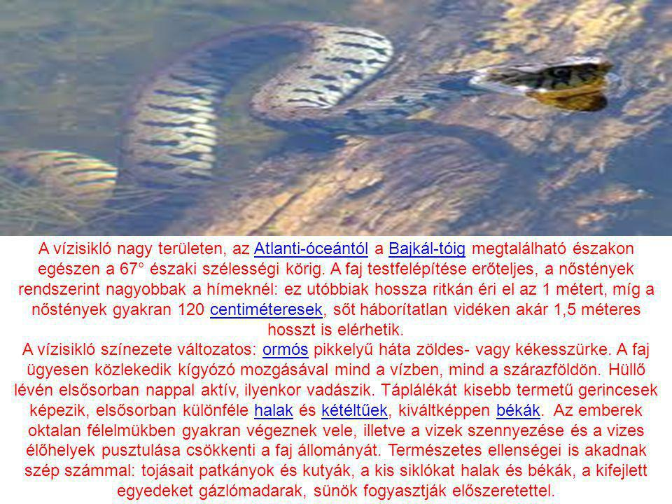 A vízisikló nagy területen, az Atlanti-óceántól a Bajkál-tóig megtalálható északon egészen a 67° északi szélességi körig. A faj testfelépítése erőteljes, a nőstények rendszerint nagyobbak a hímeknél: ez utóbbiak hossza ritkán éri el az 1 métert, míg a nőstények gyakran 120 centiméteresek, sőt háborítatlan vidéken akár 1,5 méteres hosszt is elérhetik.