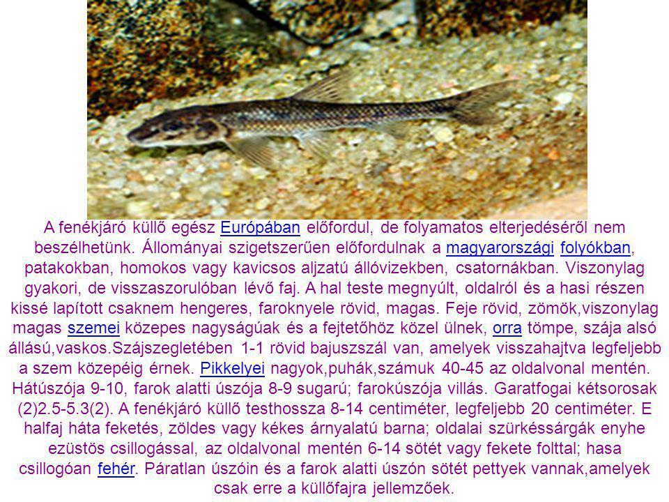 A fenékjáró küllő egész Európában előfordul, de folyamatos elterjedéséről nem beszélhetünk. Állományai szigetszerűen előfordulnak a magyarországi folyókban, patakokban, homokos vagy kavicsos aljzatú állóvizekben, csatornákban. Viszonylag gyakori, de visszaszorulóban lévő faj. A hal teste megnyúlt, oldalról és a hasi részen kissé lapított csaknem hengeres, faroknyele rövid, magas. Feje rövid, zömök,viszonylag magas szemei közepes nagyságúak és a fejtetőhöz közel ülnek, orra tömpe, szája alsó állású,vaskos.Szájszegletében 1-1 rövid bajuszszál van, amelyek visszahajtva legfeljebb a szem közepéig érnek. Pikkelyei nagyok,puhák,számuk 40-45 az oldalvonal mentén. Hátúszója 9-10, farok alatti úszója 8-9 sugarú; farokúszója villás. Garatfogai kétsorosak (2)2.5-5.3(2). A fenékjáró küllő testhossza 8-14 centiméter, legfeljebb 20 centiméter. E halfaj háta feketés, zöldes vagy kékes árnyalatú barna; oldalai szürkéssárgák enyhe ezüstös csillogással, az oldalvonal mentén 6-14 sötét vagy fekete folttal; hasa csillogóan fehér. Páratlan úszóin és a farok alatti úszón sötét pettyek vannak,amelyek csak erre a küllőfajra jellemzőek.