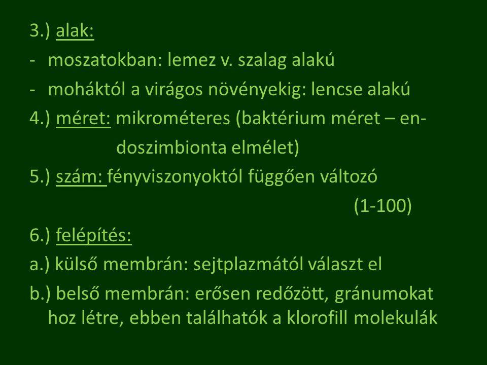 3.) alak: moszatokban: lemez v. szalag alakú. moháktól a virágos növényekig: lencse alakú. 4.) méret: mikrométeres (baktérium méret – en-