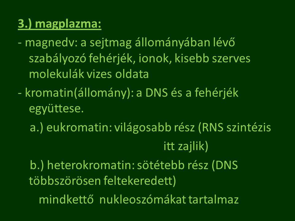 3.) magplazma: - magnedv: a sejtmag állományában lévő szabályozó fehérjék, ionok, kisebb szerves molekulák vizes oldata - kromatin(állomány): a DNS és a fehérjék együttese.