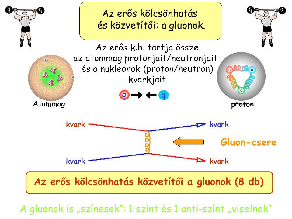Az erős kölcsönhatás és közvetítői: a gluonok.