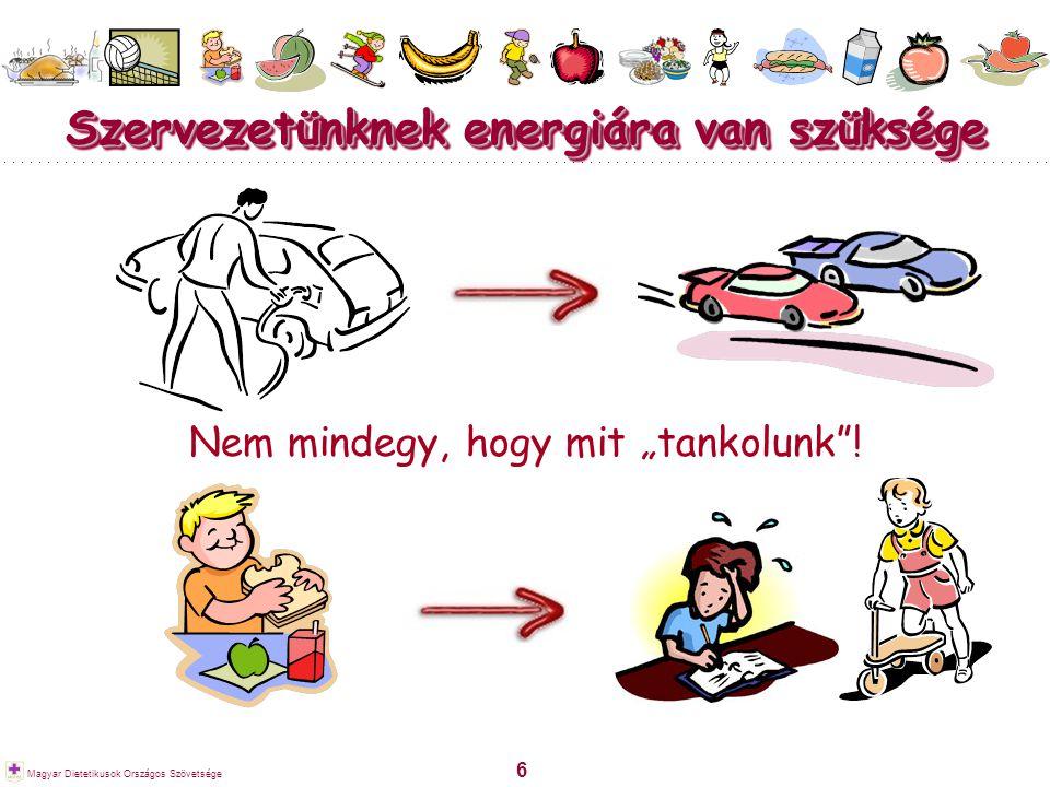 Szervezetünknek energiára van szüksége