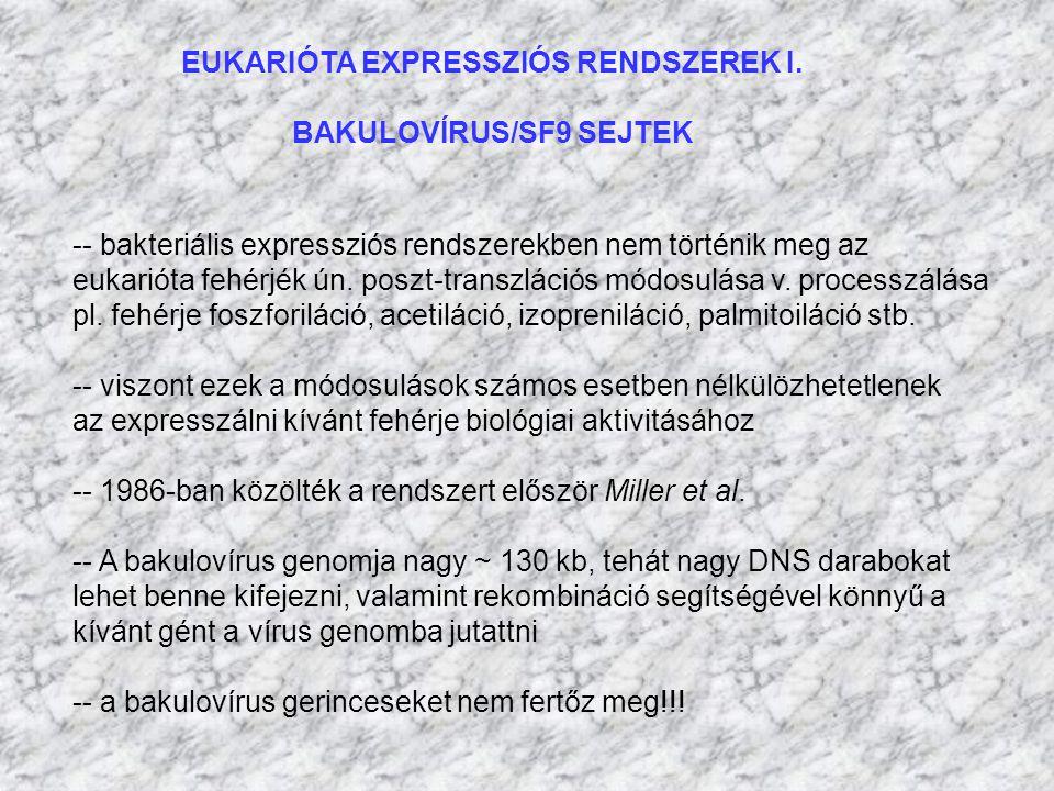 EUKARIÓTA EXPRESSZIÓS RENDSZEREK I. BAKULOVÍRUS/SF9 SEJTEK