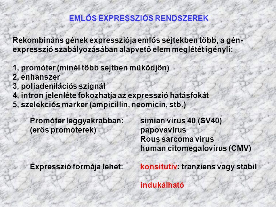 EMLŐS EXPRESSZIÓS RENDSZEREK