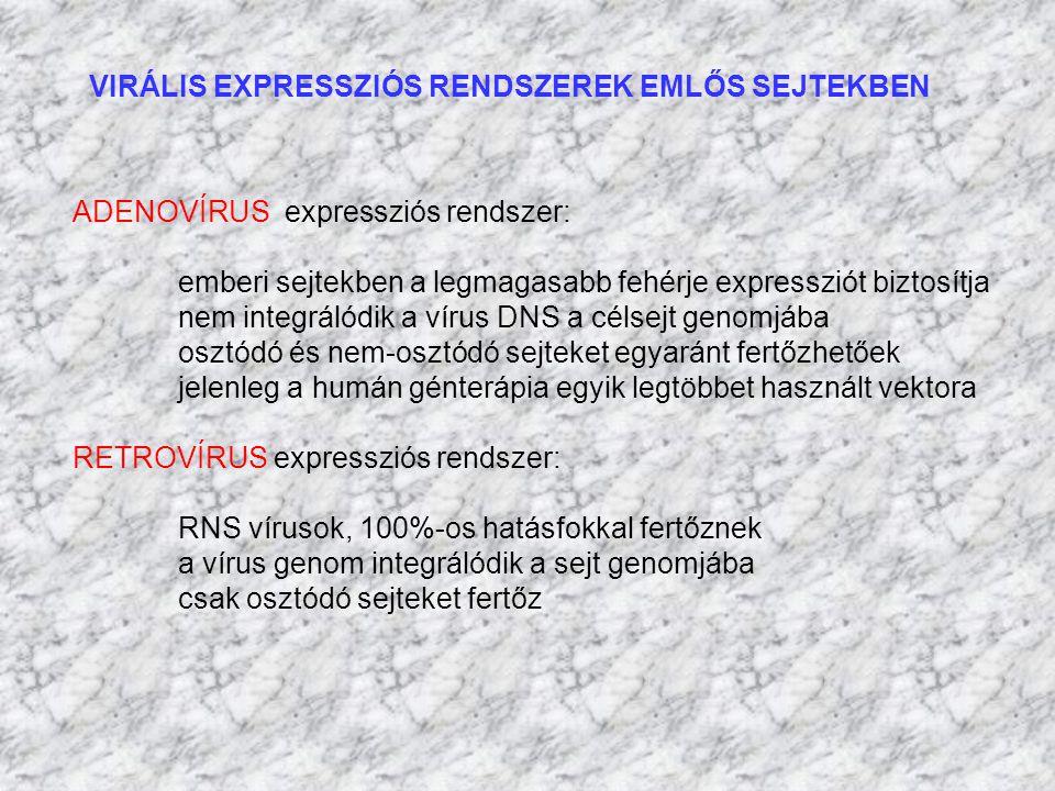 VIRÁLIS EXPRESSZIÓS RENDSZEREK EMLŐS SEJTEKBEN