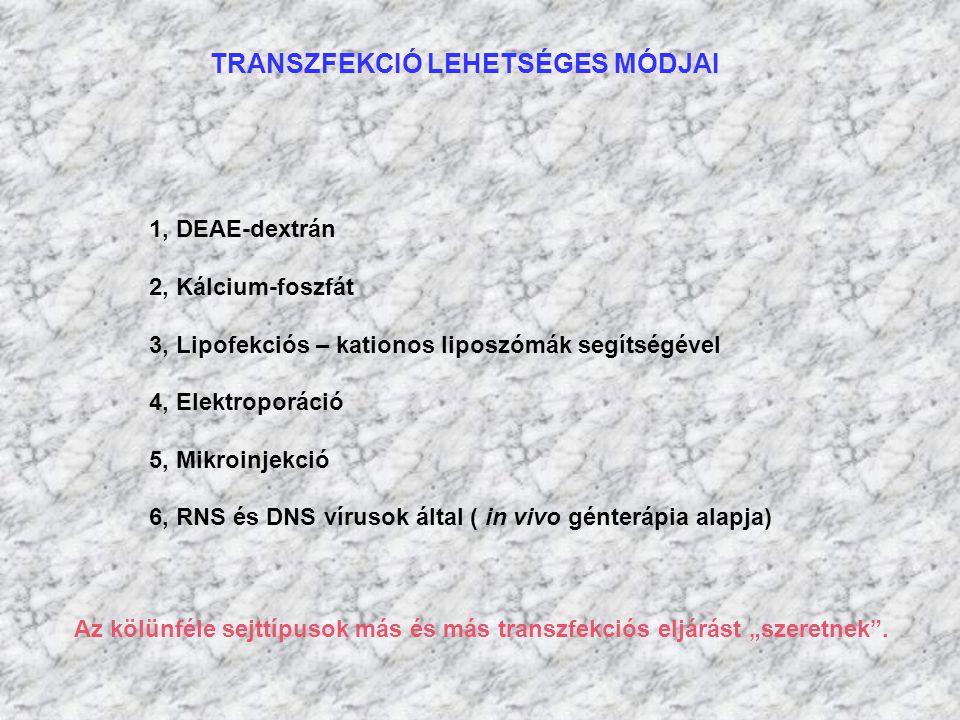 TRANSZFEKCIÓ LEHETSÉGES MÓDJAI