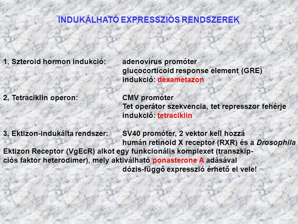 INDUKÁLHATÓ EXPRESSZIÓS RENDSZEREK