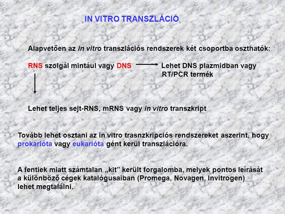 IN VITRO TRANSZLÁCIÓ Alapvetően az in vitro transzlációs rendszerek két csoportba oszthatók: