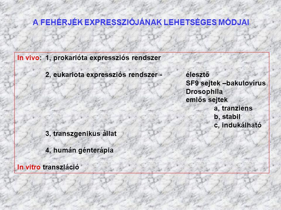 A FEHÉRJÉK EXPRESSZIÓJÁNAK LEHETSÉGES MÓDJAI